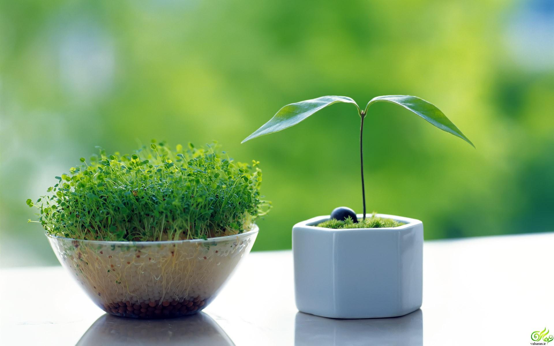 بهترین زمان برای سبزه انداختن نوروز 97 + اطلاعات کامل تر