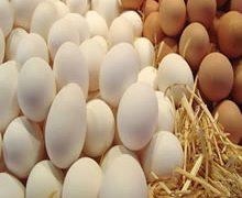 قیمت تخم مرغ در ماه رمضان / تخم مرغ در ماه رمضان گران نمی شود / قیمت شانه تخمه مرغ